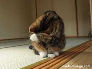 cat-poem-shame2