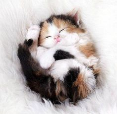 fluffy_cat
